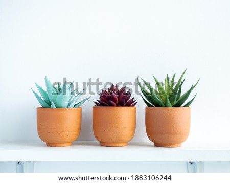Green and red succulent plants in small modern terracotta pots on white wood shelf isolated on white wall background with copy space. Photo stock ©
