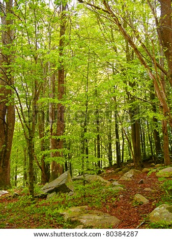 Green and wild nature, forest in Catalonia(Spain). Green treet at spring contrasting with brown leaves in ground