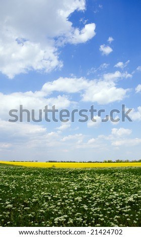 Green and yellow field under the summer sky