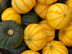 Green and yellow Kabocha Squashes. Kabocha Squash is a type of winter squash, a Japanese variety of the species Cucurbita maxima. It is also called Japanese pumpkin.