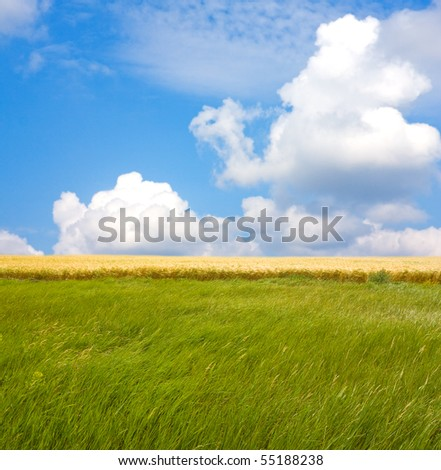 Green and yellow meadow under nice summer sky