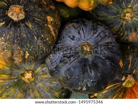 Green and yellow pumpkin pile. Ripe squash closeup photo. Autumn season background. Thanksgiving or Halloween banner template. Fall seasonal card with pumpkin. Whole squash texture. Cookbook or recipe