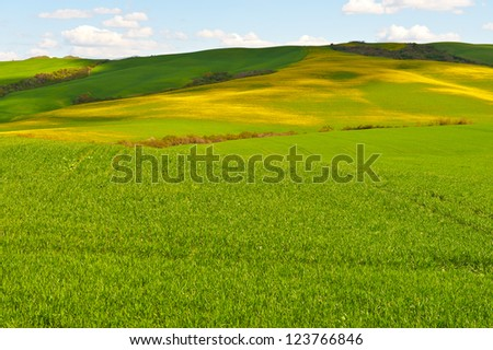 Green and Yellow Sloping Meadows of Tuscany