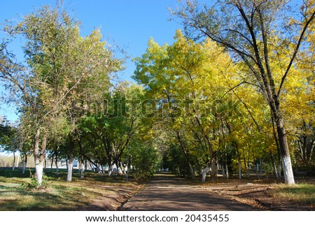 Green and yellow trees on alley fall time