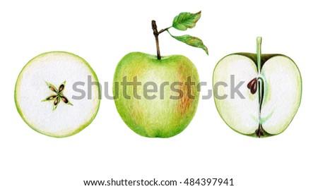 Green apple. Hand drawn illustration