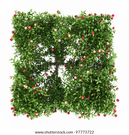 Green Apple tree full of red apples isolated over white
