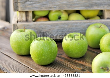 Green apples in a box. Scattered on the table apples.