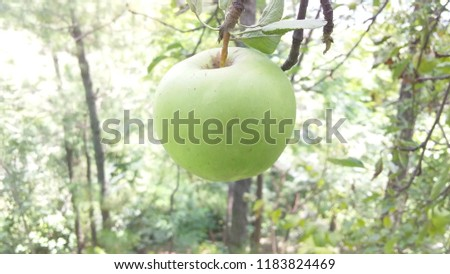 green apples pics bluer background abd shining image.