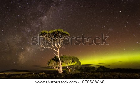 Green aurora arc with Milky Way behind illuminated tree