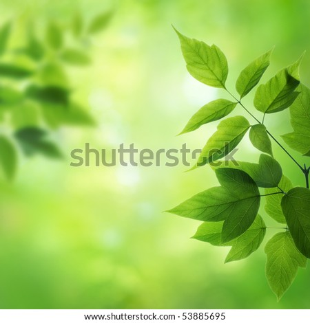 Green Backgrounds on Green Background Stock Photo 53885695   Shutterstock