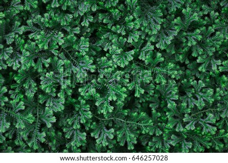 green background and green texture  #646257028
