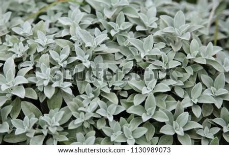 green background, botany, background, texture, botany #1130989073