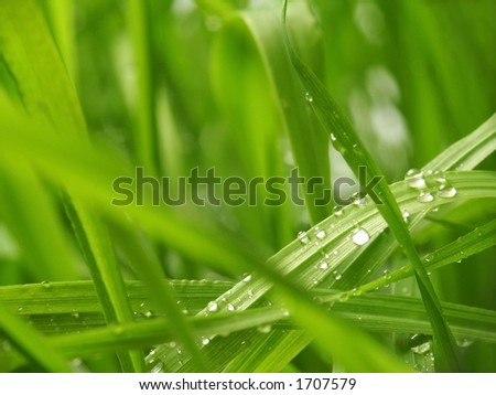 Green Background Grass with Water Drops