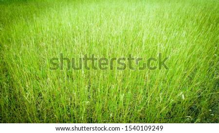 Green background / grassland surface Grassland in a premium look Natural concepts #1540109249