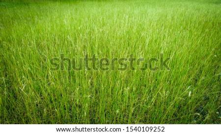 Green background / grassland surface Grassland in a premium look Natural concepts #1540109252