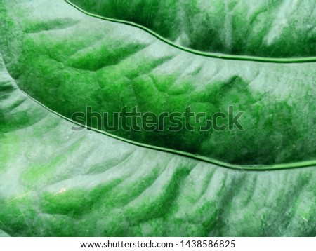 Green background, leaves, leaves, leaves reflecting natural light #1438586825