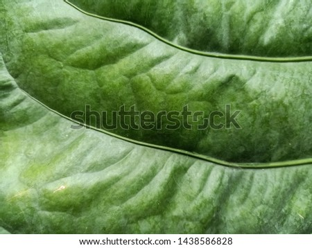 Green background, leaves, leaves, leaves reflecting natural light #1438586828