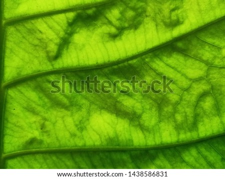 Green background, leaves, leaves, leaves reflecting natural light #1438586831