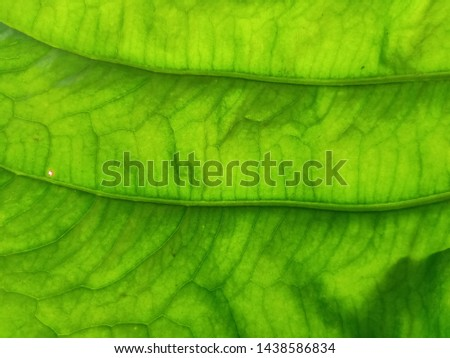 Green background, leaves, leaves, leaves reflecting natural light #1438586834