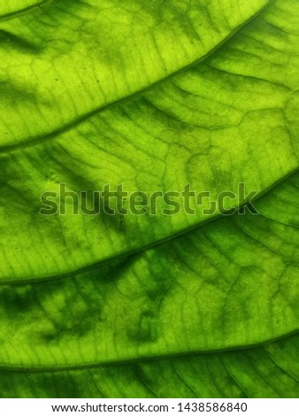 Green background, leaves, leaves, leaves reflecting natural light
