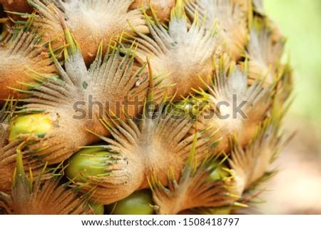 green background nature botany beautiful #1508418797
