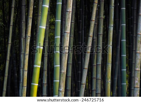 Green background with bamboo. Bamboo jungle - tropical forest texture. Asian design for zen culture tradition.