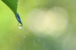 Green background with drop of rain on leaf.