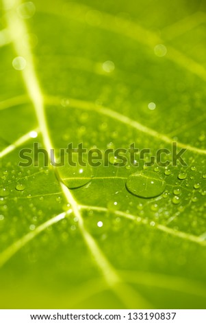green background with grass / leaf with rain droplets