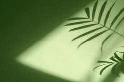 Green background with shadow of palm leaves. Ecology, nature, purity and authenticity concept. Texture template for design, mock up, wallpaper, poster, banner, announcement, invitation, greeting card.