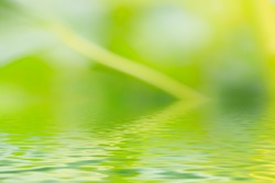 Green background with water reflection