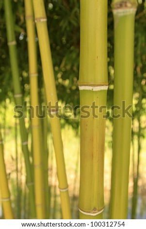 Green bamboo - stock photo