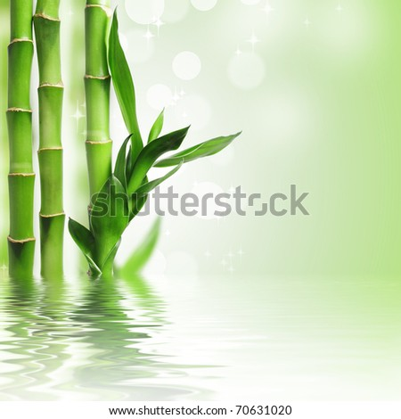 Green bamboo against bokeh background