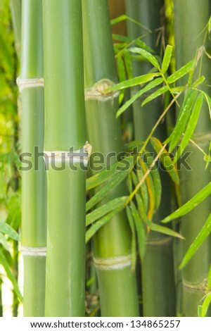 green bamboo and some leaf