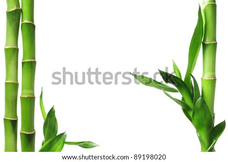 Green bamboo border isolated on white