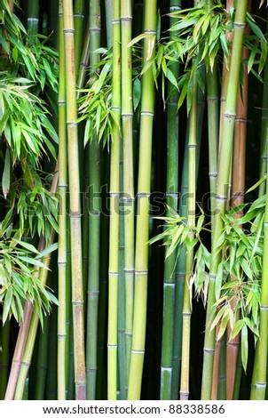 Green bamboo can be used for natural background