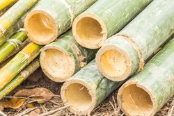 Green bamboo cutting pipe for use general.