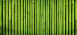 Green bamboo fence texture background, bamboo texture panorama
