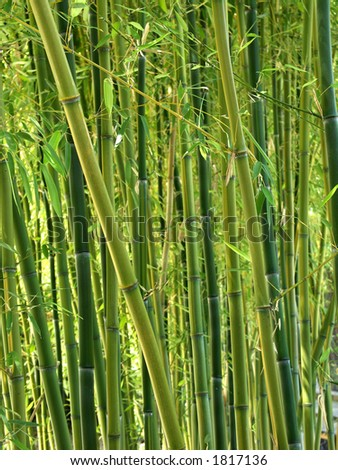 Green Bamboo Forest
