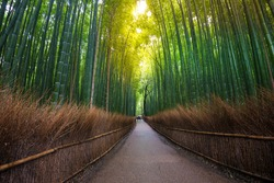 Green bamboo forest and walk way.