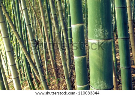 green bamboo forest background: sharp focus on first big pole