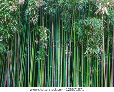 Green bamboo forest. natural background