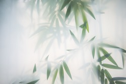 Green bamboo in the fog with stems and leaves behind frosted glass. Nature exotic background