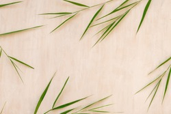 Green bamboo leaves, asian style plants, top view, copy space. Trendy bamboo leaves flat lay on white wooden background.