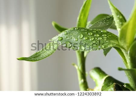 Green bamboo plant with leaves on blurred background, closeup #1224303892