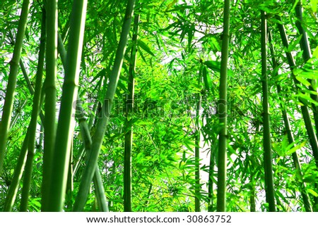stock-photo-green-bamboo-shoots-30863752.jpg