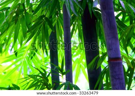 stock-photo-green-bamboo-shoots-33263479.jpg