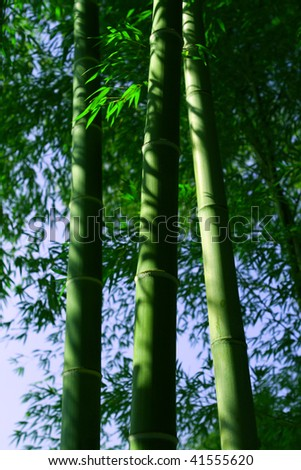 stock-photo-green-bamboo-stalks-41555620.jpg
