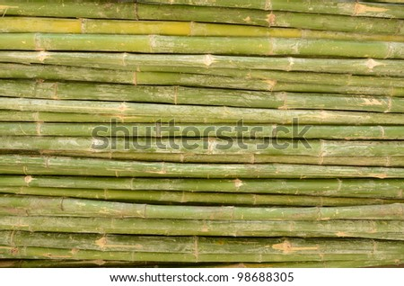 Green bamboo stems arranged