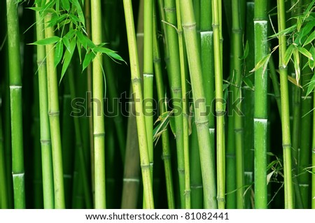 green bamboo stems close up #81082441