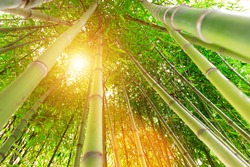 Green Bamboo Trees - View From Below - Stock Photo